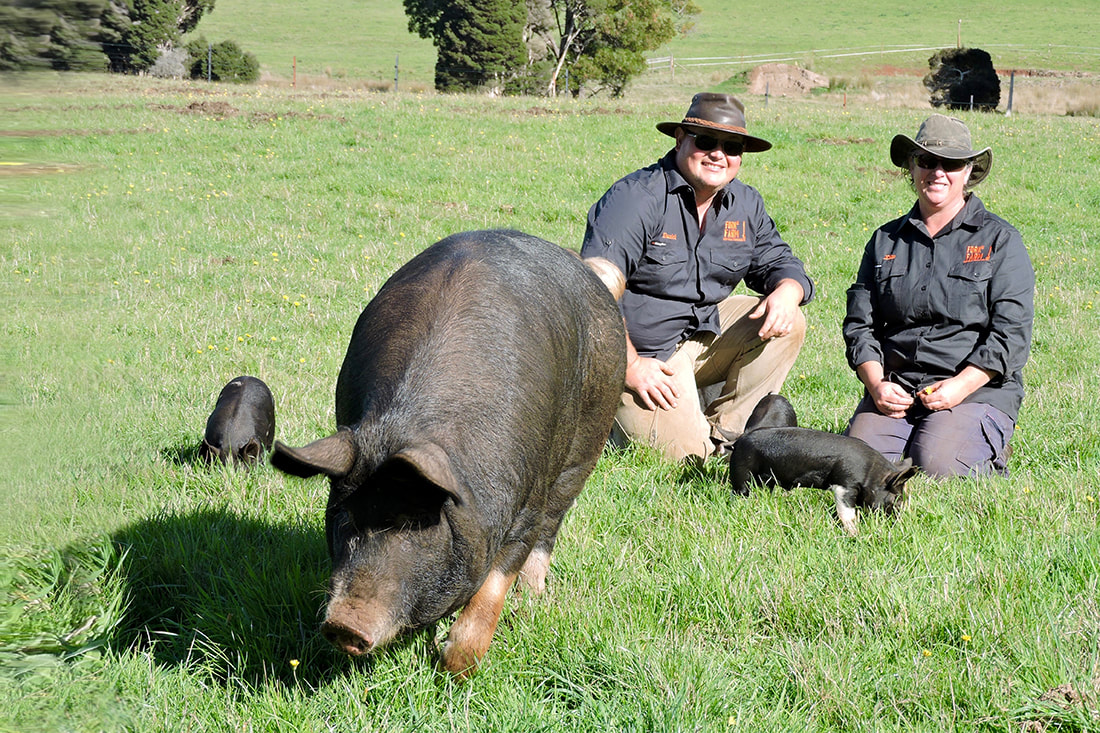 Fork it Farm free range, ethically raised, pastured Berkshire pork Tasmania