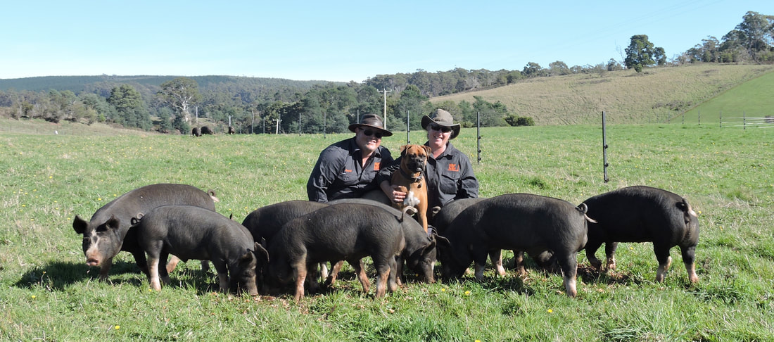 Daniel and Kim Croker of Fork it Farm, raising forkin' tasty pork in Tasmania.