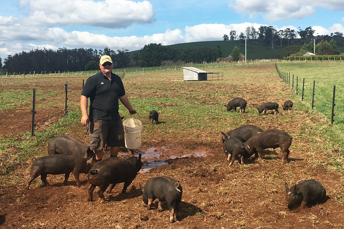 Picturefree range, ethically raised, pastured pork tasmania